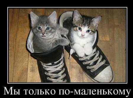 смешные картинки и анекдоты в картинках