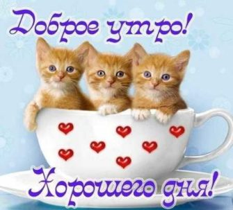 пожелания доброго утра и хорошего дня в картинках бесплатно