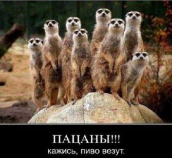 прикольные крб 335x308 - Фото с комментариями - прикольный юмор в картинках