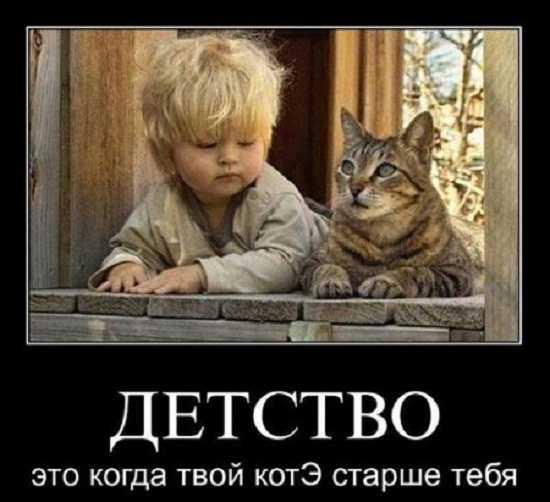 картинки 3 - Самые смешные картинки с надписями до слез
