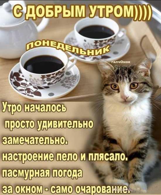Доброе утро понедельника картинки прикольные