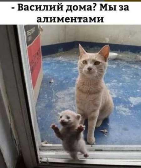 фото котов и кошек прикольные с надписями смешные до слез скачать