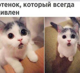 Прикольные картинки смешные до слез