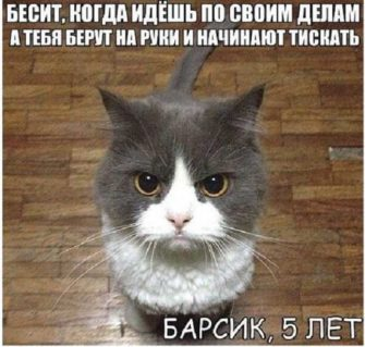 прикольные про котов рБ 335x319 - Пожелания зимнего доброго утра и хорошего дня