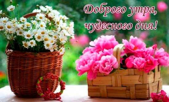 Картинки с пожеланиями доброго утра и хорошего дня