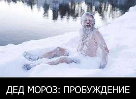 Картинки смешные про Новый год