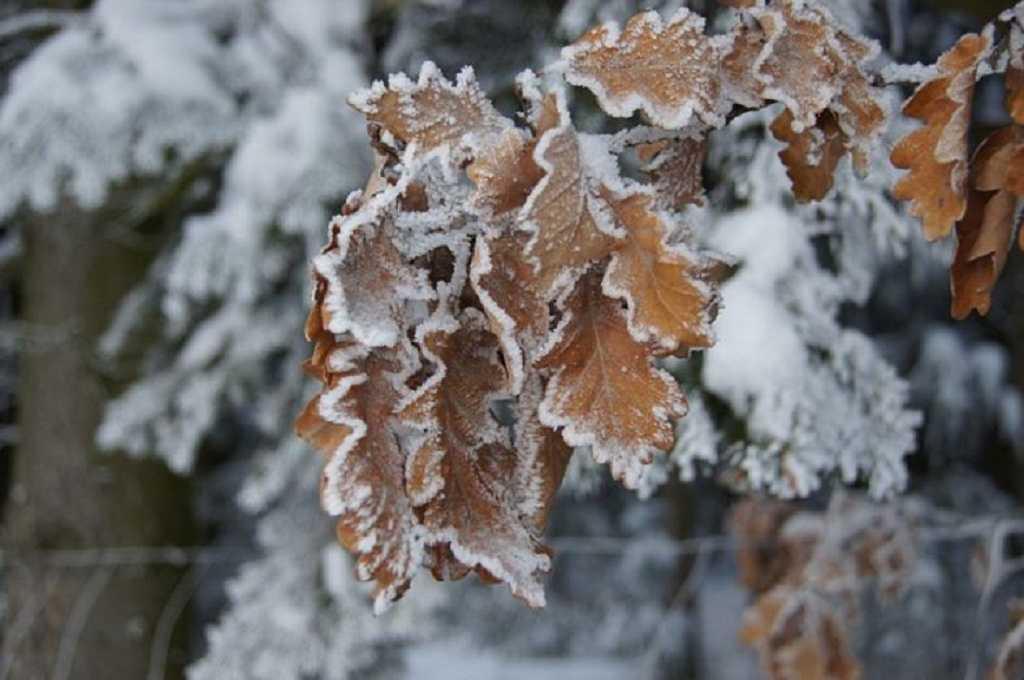 .jpg - Зимние картинки на рабочий стол