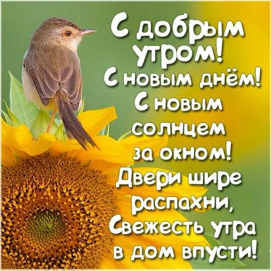 Pozhelanie dobrogo utra i khoroshego dnia 2