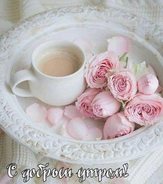 красивые картинки с добрым утром и хорошего дня