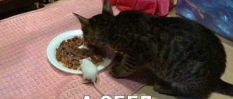 фотографии котиков смешных очень смешных