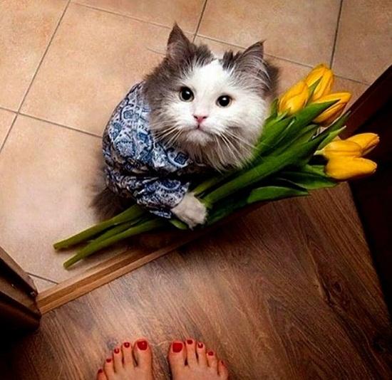 Цветы 8 марта картинки прикольные