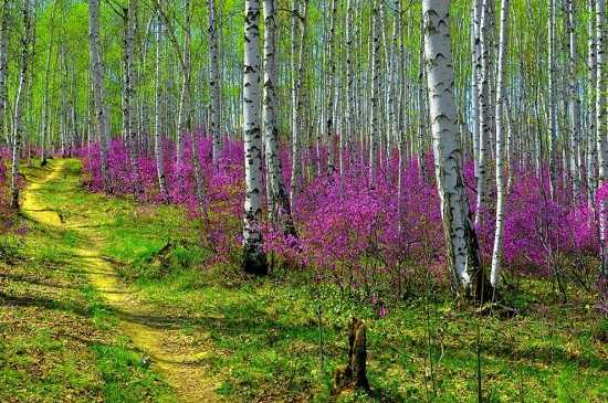 картинки природы май (2)