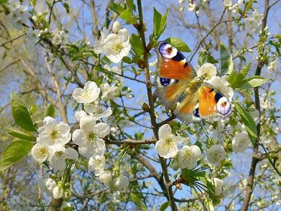картинки природы май (3)