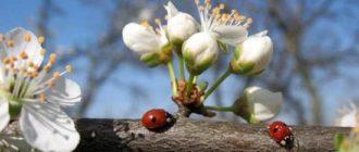 картинки природы май
