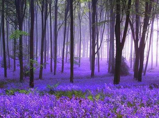 картинки природы май месяца (10)