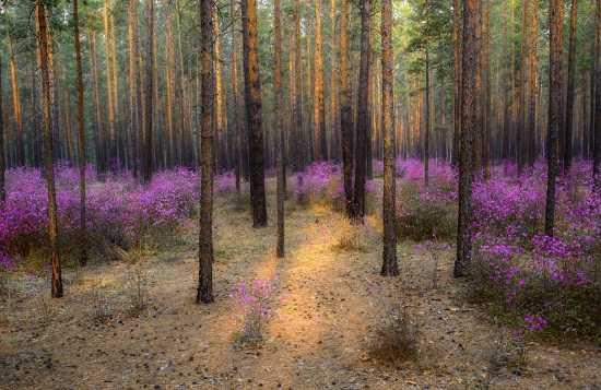картинки природы май месяца (11)