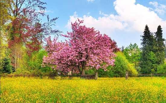 картинки природы май месяца (2)