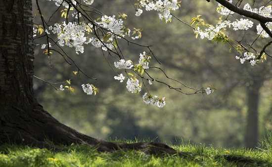 картинки природы май месяца (4)