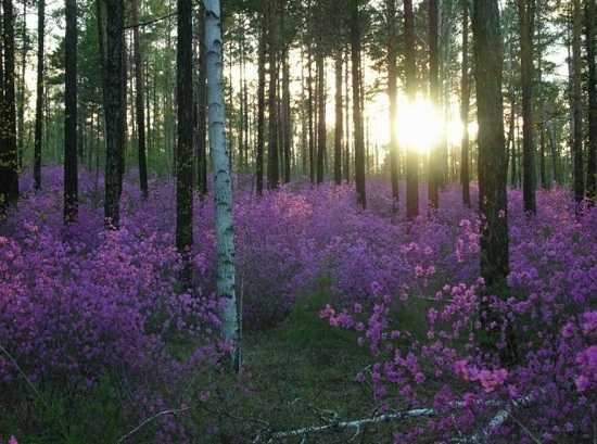 картинки природы май месяца (5)