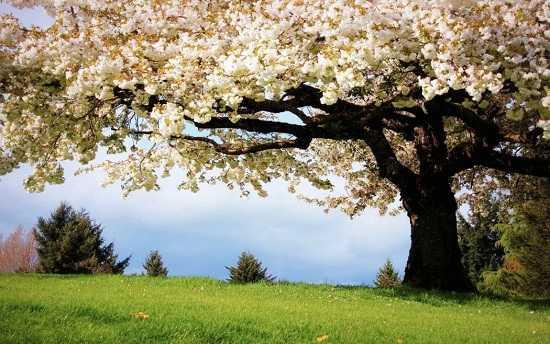 картинки природы май месяца (6)