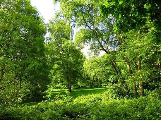 картинки весна май природа (2)