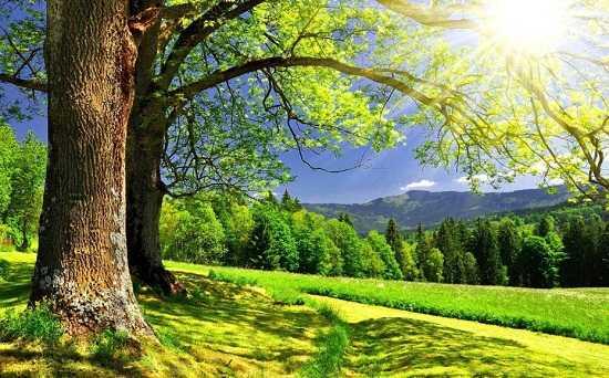 картинки весна май природа (4)