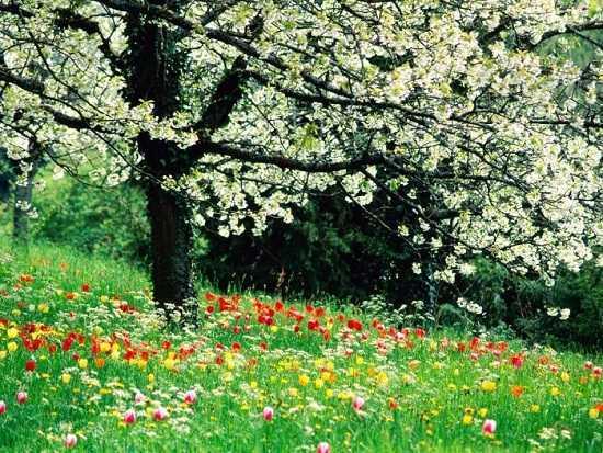майская природа картинки (2)