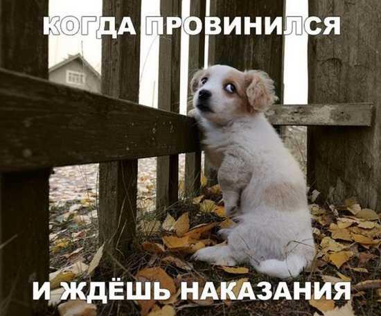 смешные картинки с надписями до слез (3)