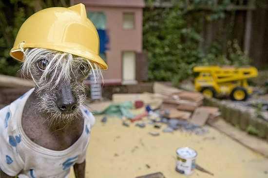 прикольные картинки про строителей (4)