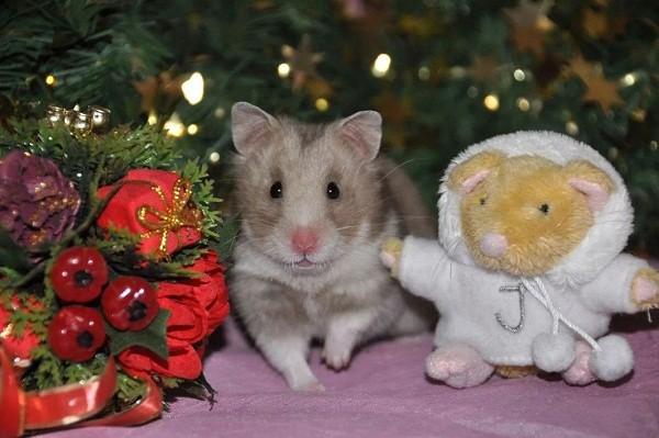 картинки с крысами прикольные (11)