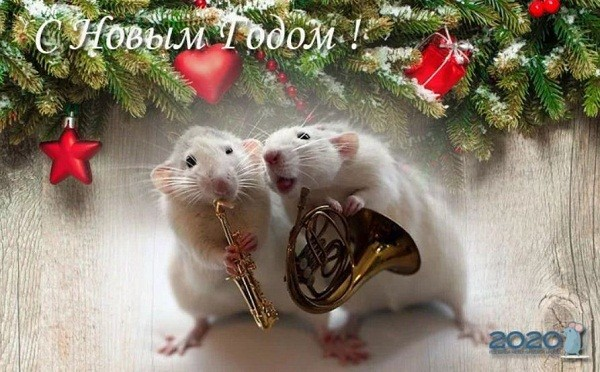картинки с крысами прикольные (21)