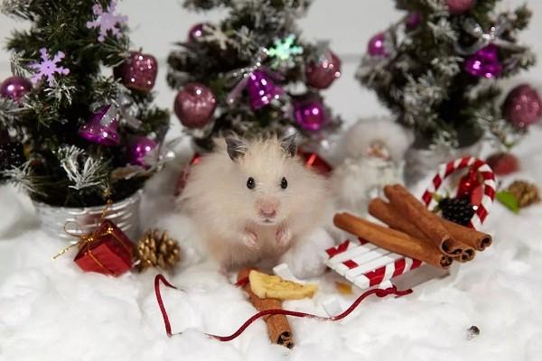 картинки с крысами прикольные (3)