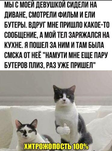 смешные рассказы