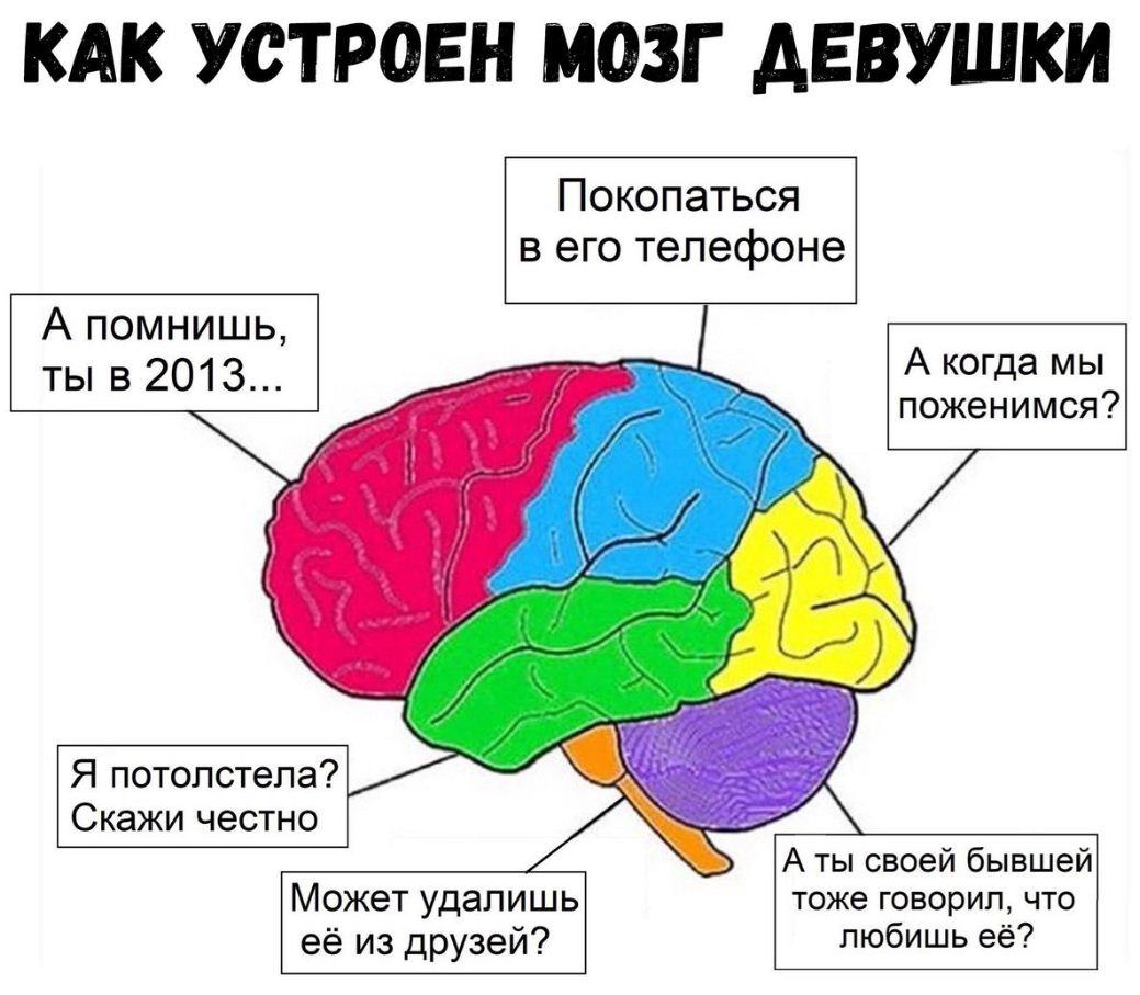 как устроен мозг девушки