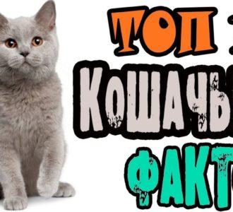 Факты о котах и кошках