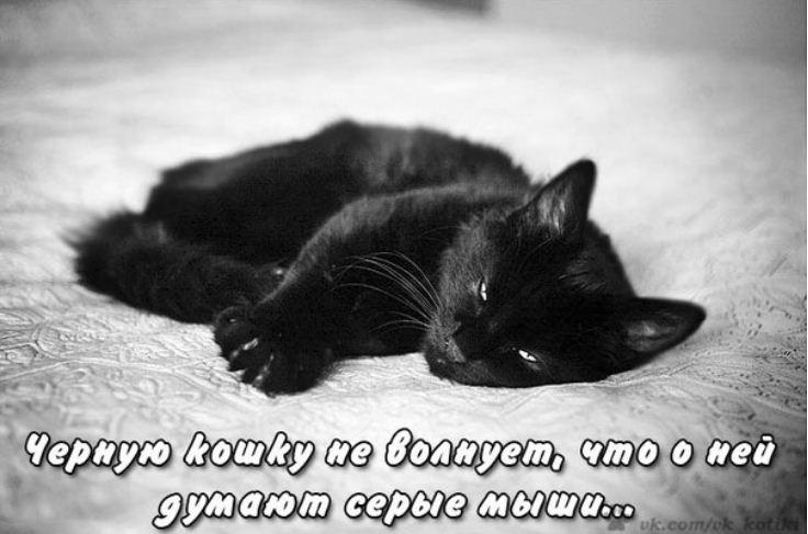 фото приколы про котов (10)