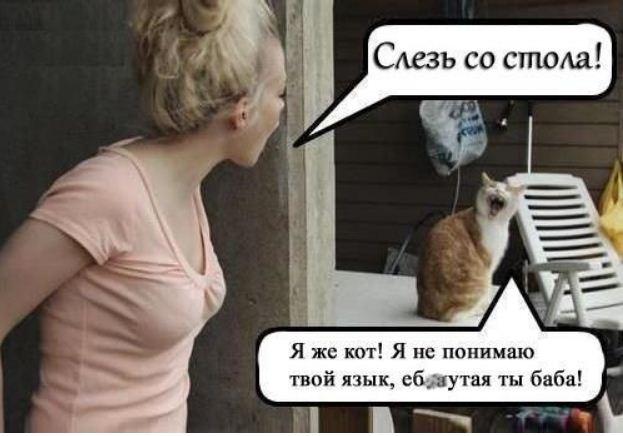 фото приколы про котов (12)