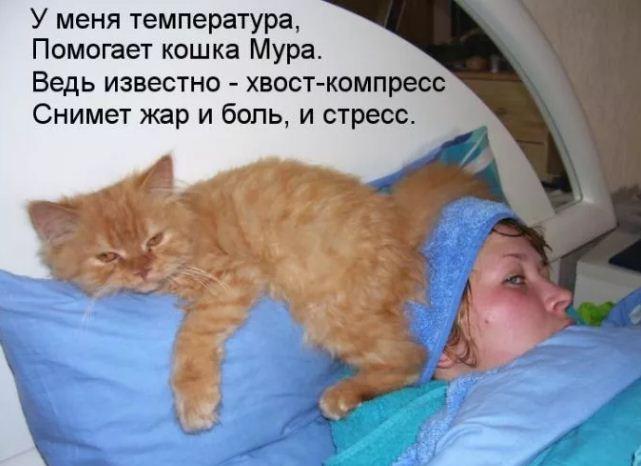 фото приколы про котов (13)