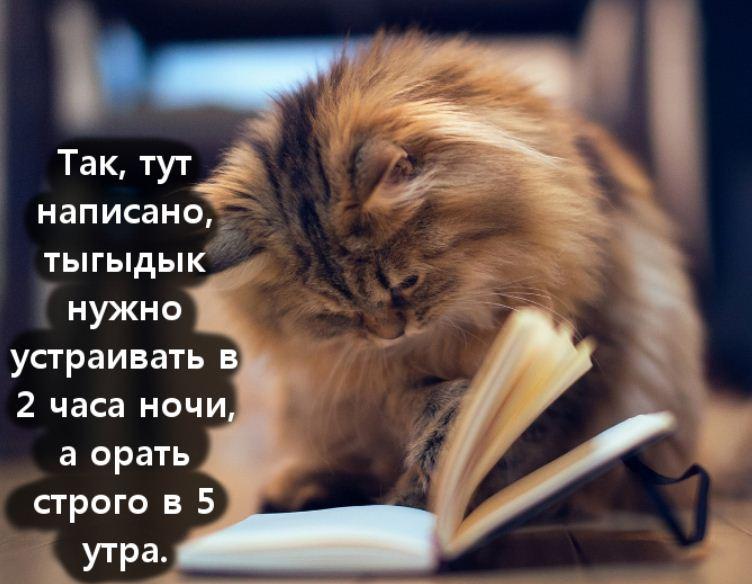 фото приколы про котов (14)