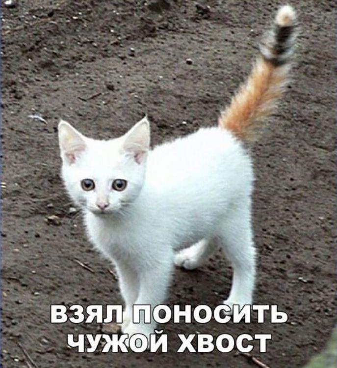 фото приколы про котов (15)