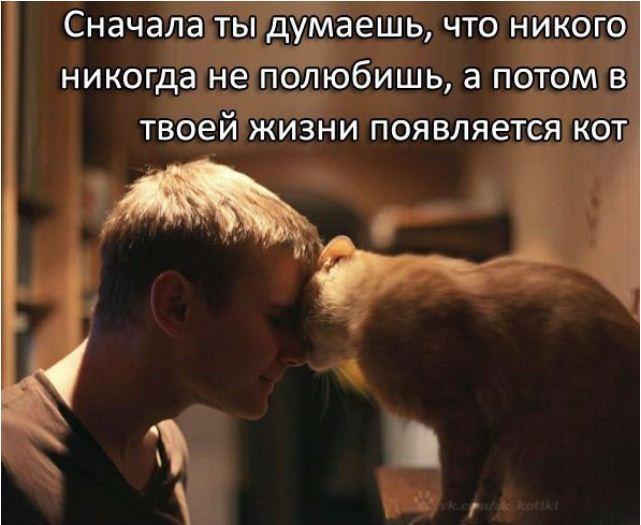 фото приколы про котов (16)