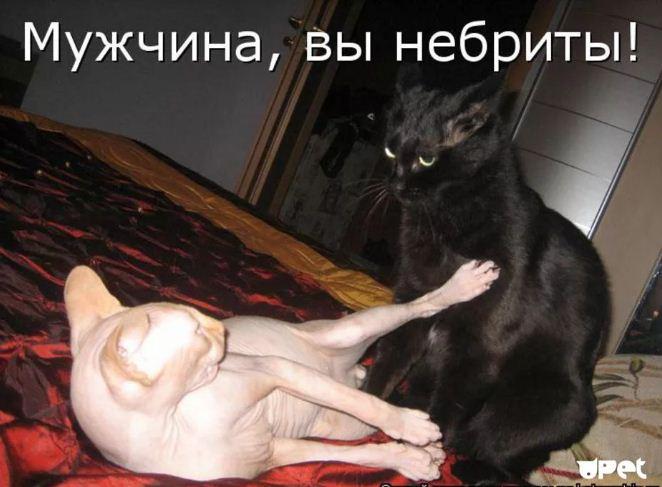 фото приколы про котов (17)