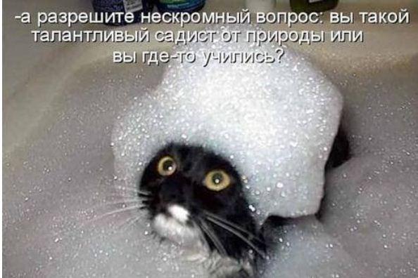 фото приколы про котов (18)