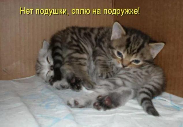 фото приколы про котов (19)