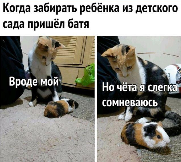 фото приколы про котов (2)