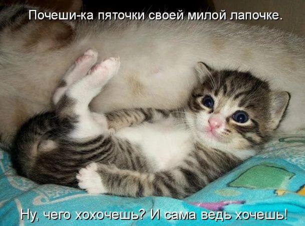 фото приколы про котов (21)