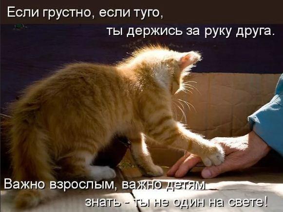 фото приколы про котов (22)