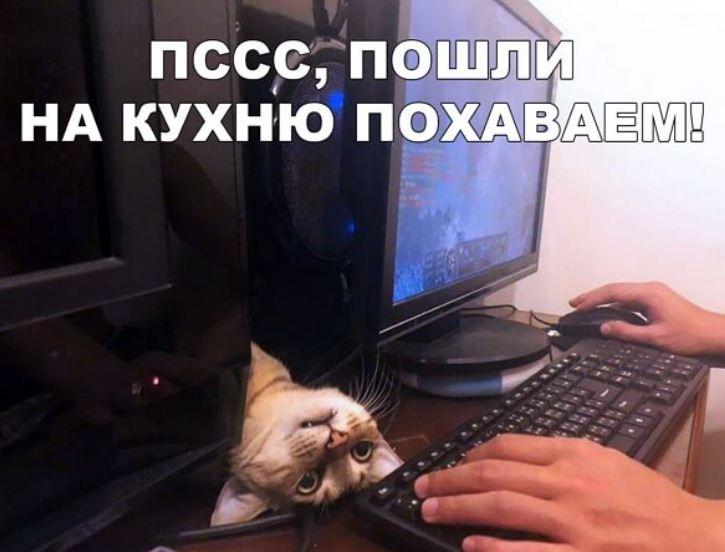 фото приколы про котов (23)