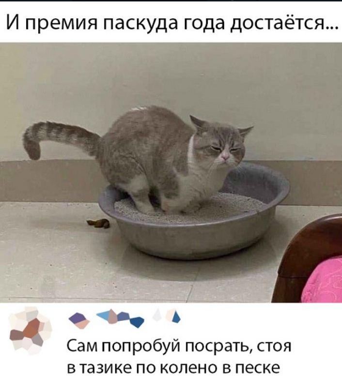 фото приколы про котов (24)