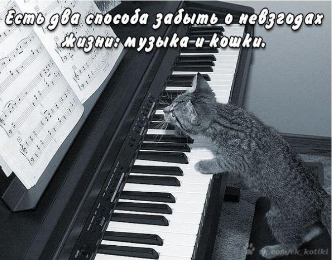фото приколы про котов (25)